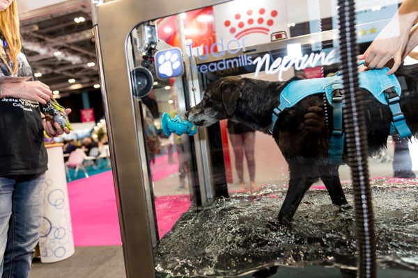 London Vet Show demonstrates its pedigree