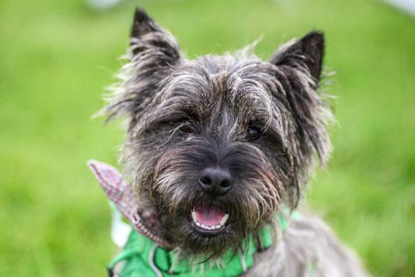 Solid PAW-formance lands  Vividink Just Dogs Live